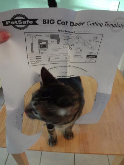 cats | www.accidentalokie.com